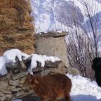 Afghan Badakhshan – بدخشان
