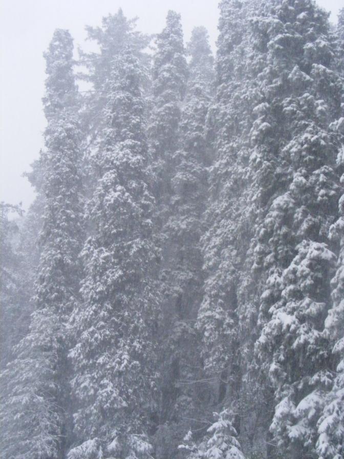 Winter 120